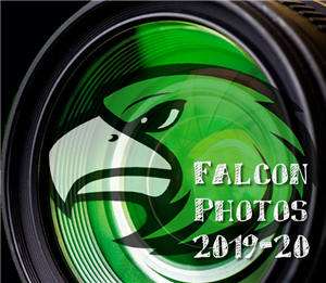 Falcon Photos
